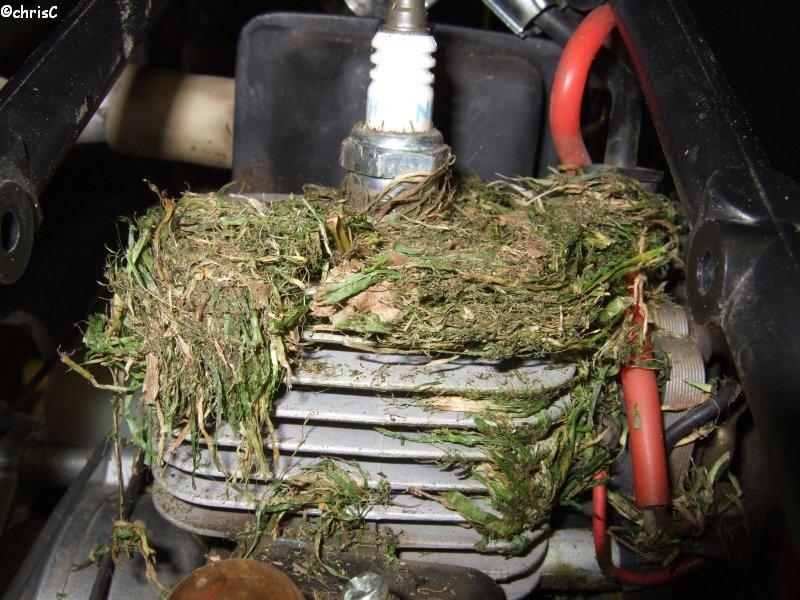 Grasfang unter Zylinderabdeckung